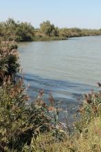 Voie Verte d'Aigues-Mortes